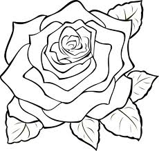 230x219 Rose Line Drawing