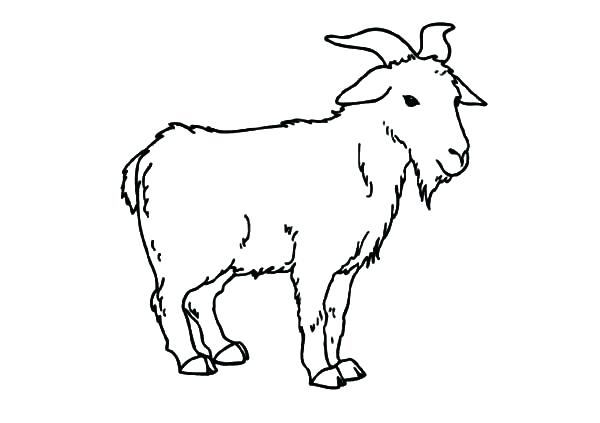 600x423 Goat For Coloring Coloring Outlines Outline And Pictures For Small