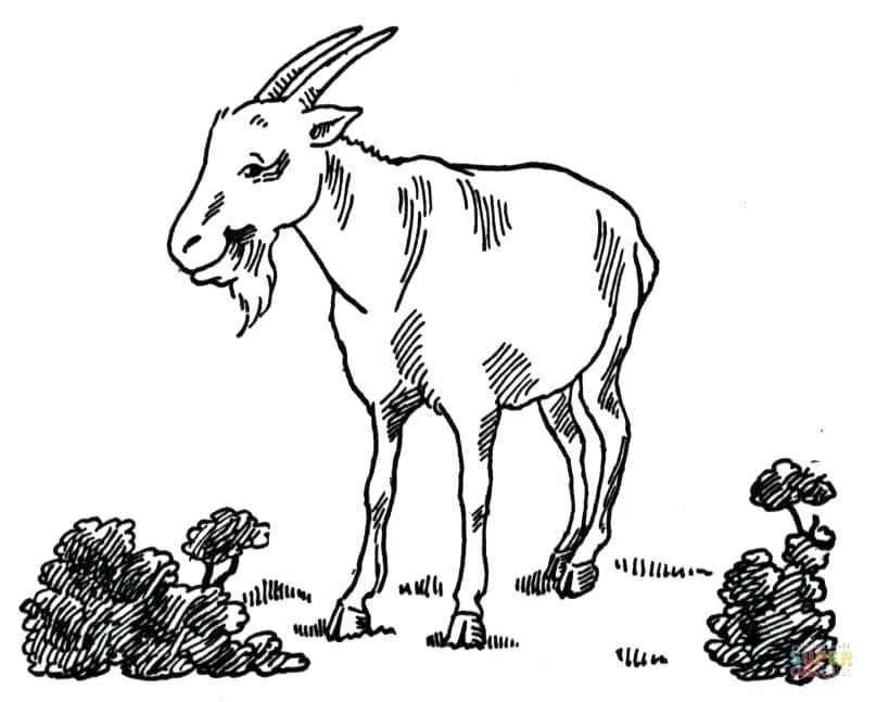 807x647 Goat For Coloring Goat At Garden Goat Simulator Coloring Pages