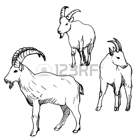 450x450 Goat Pen Stock Photos Royalty Free Business Images