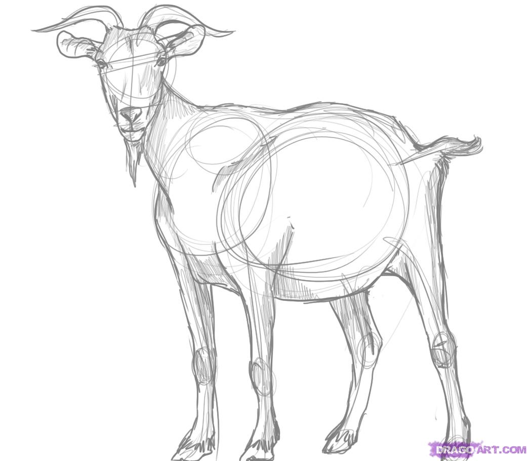 1045x910 How To Draw A Billy Goat Step 5 Cards Goats