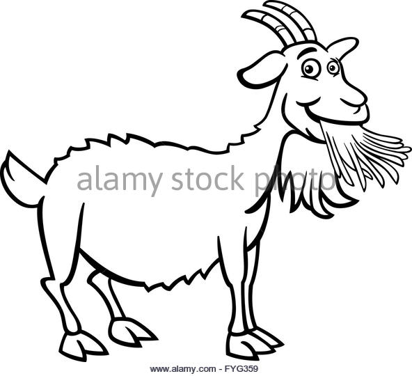 592x540 Black Goat Beard Stock Photos Amp Black Goat Beard Stock Images