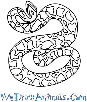 300x350 How To Draw A Burmese Python
