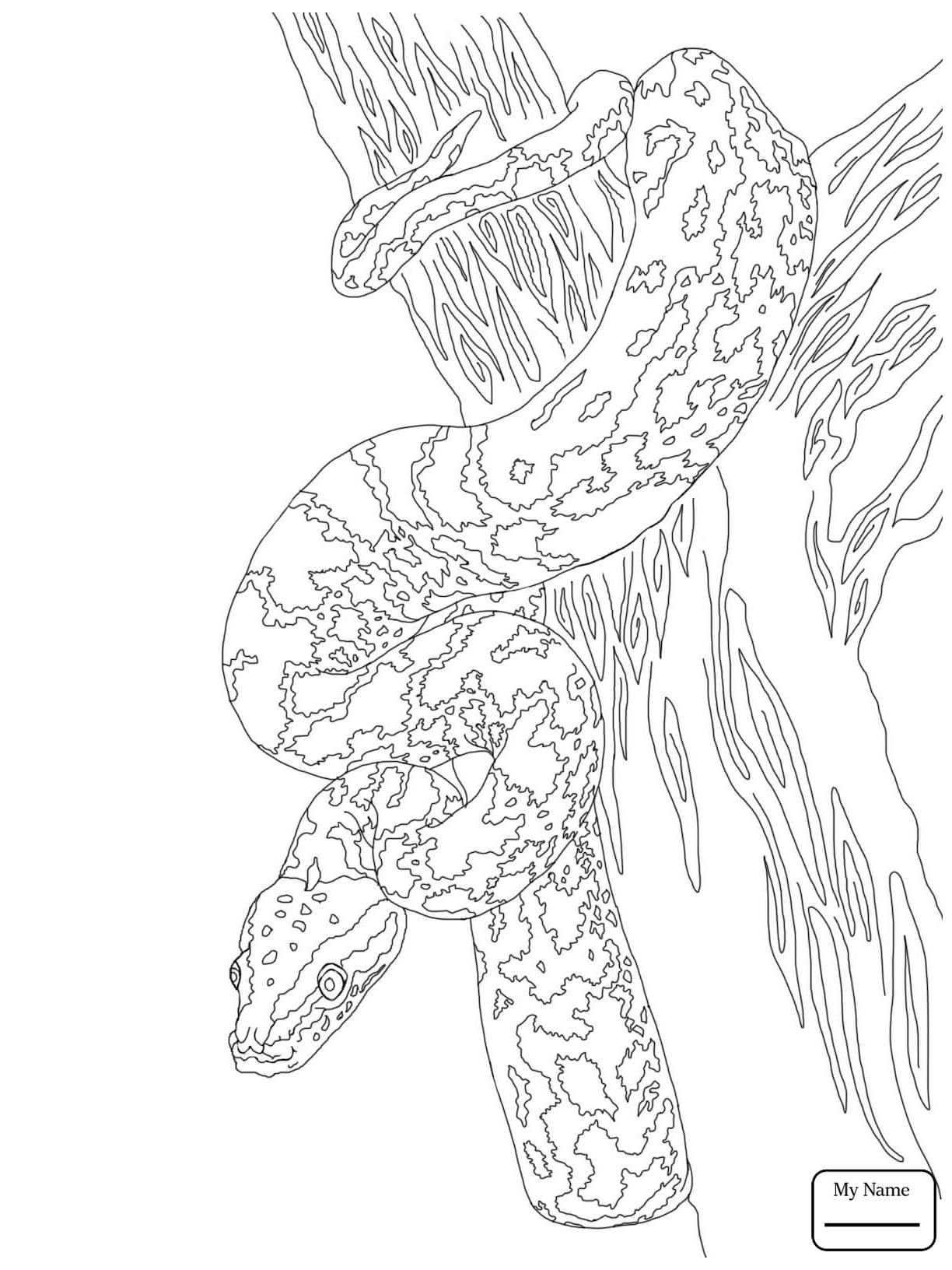 1224x1632 Reptiles African Rock Python Realistic Snakes Coloring Pages