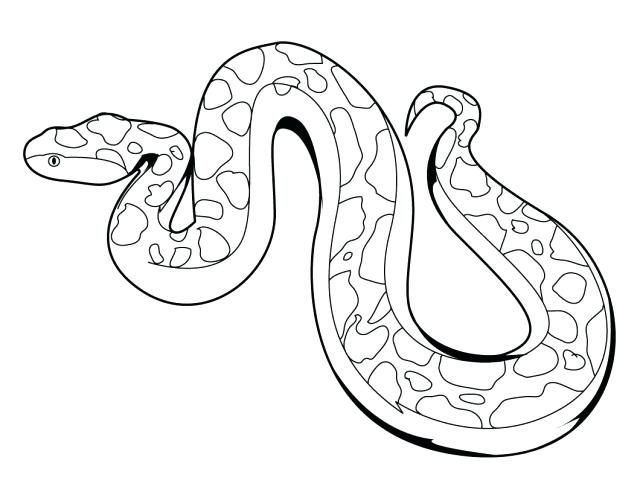 640x495 mesmerizing snakes coloring pages 56 for your line drawings with