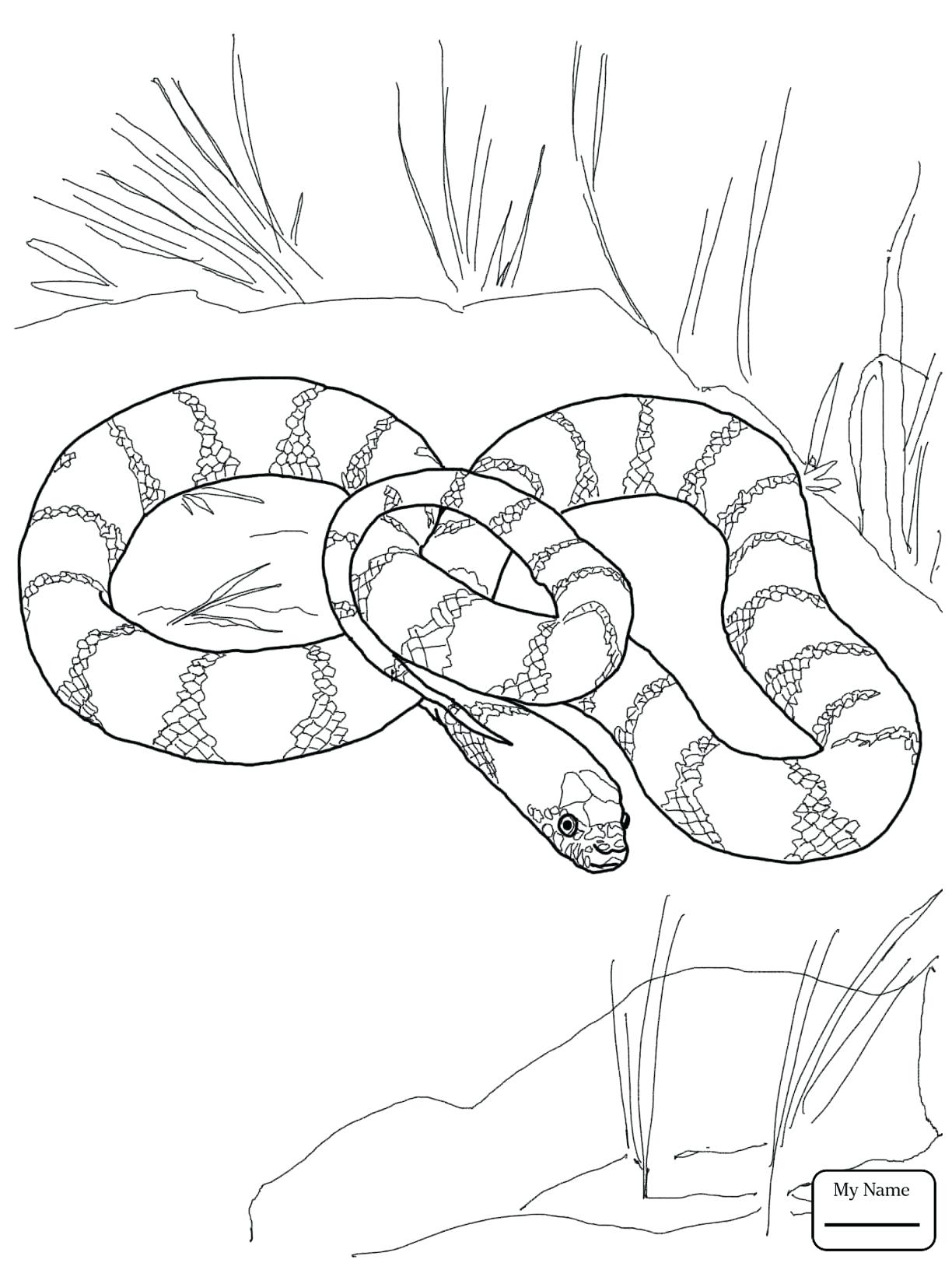 1224x1632 Coloring King Cobra Coloring Pages