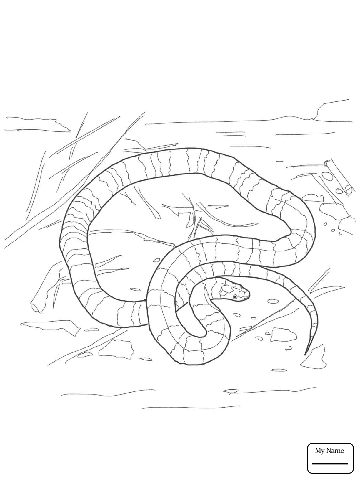 1224x1632 Coloring Pages For Kids African Rock Python Reptiles Realistic