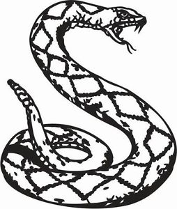 254x300 Curled Up Snake Hissing Python Car Decal Sticker Ebay