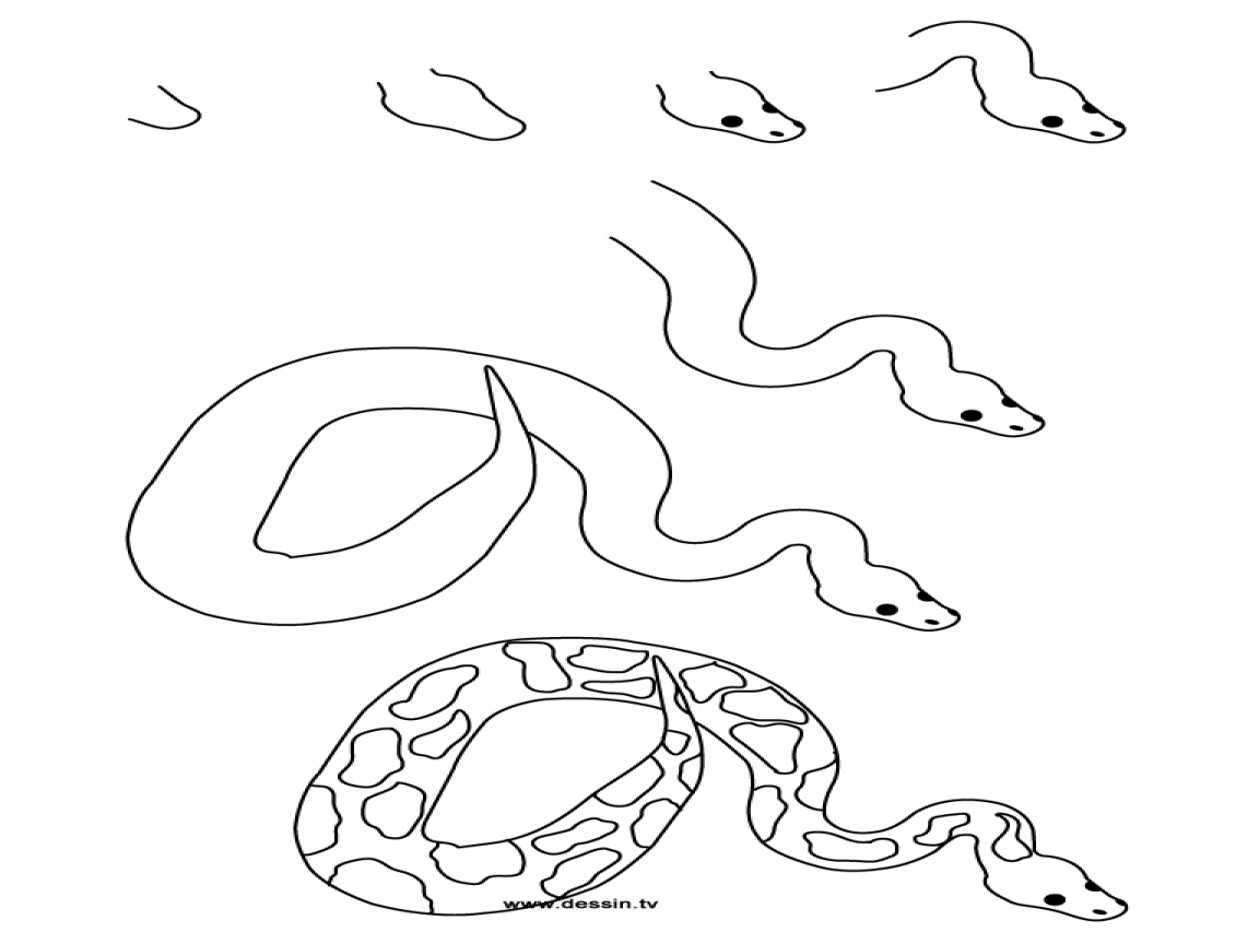1152x864 Coloring Step By Snake How To Draw A Python With Simple