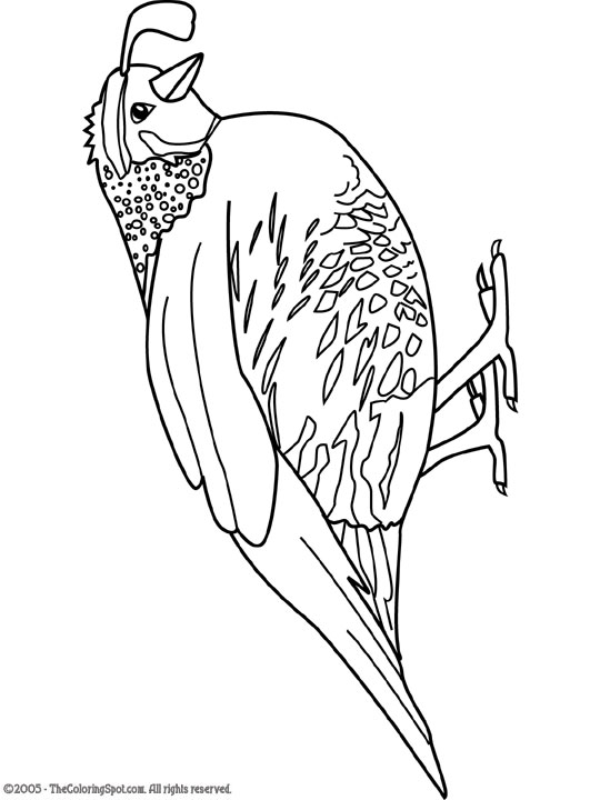 540x720 Quail Audio Stories For Kids Amp Free Coloring Pages From Light Up