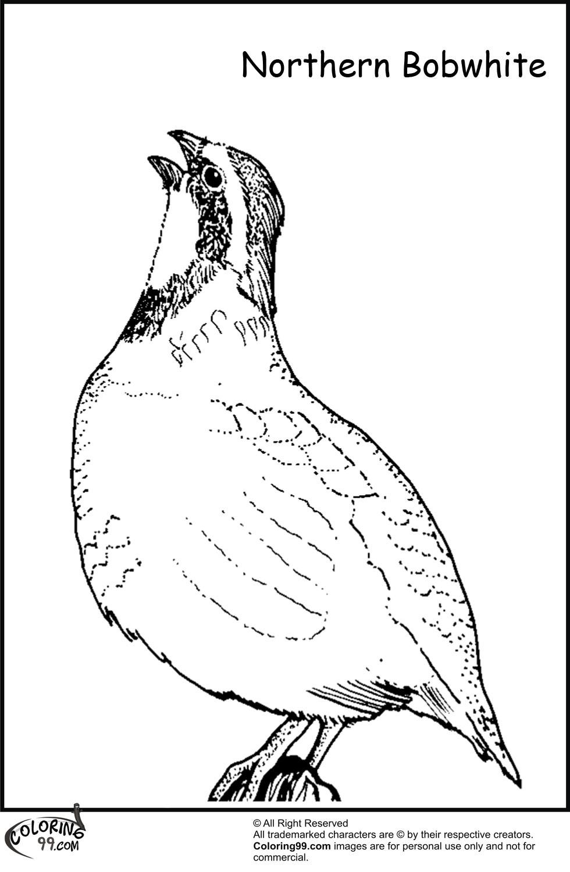 Quail Drawing at GetDrawings.com | Free for personal use Quail ...