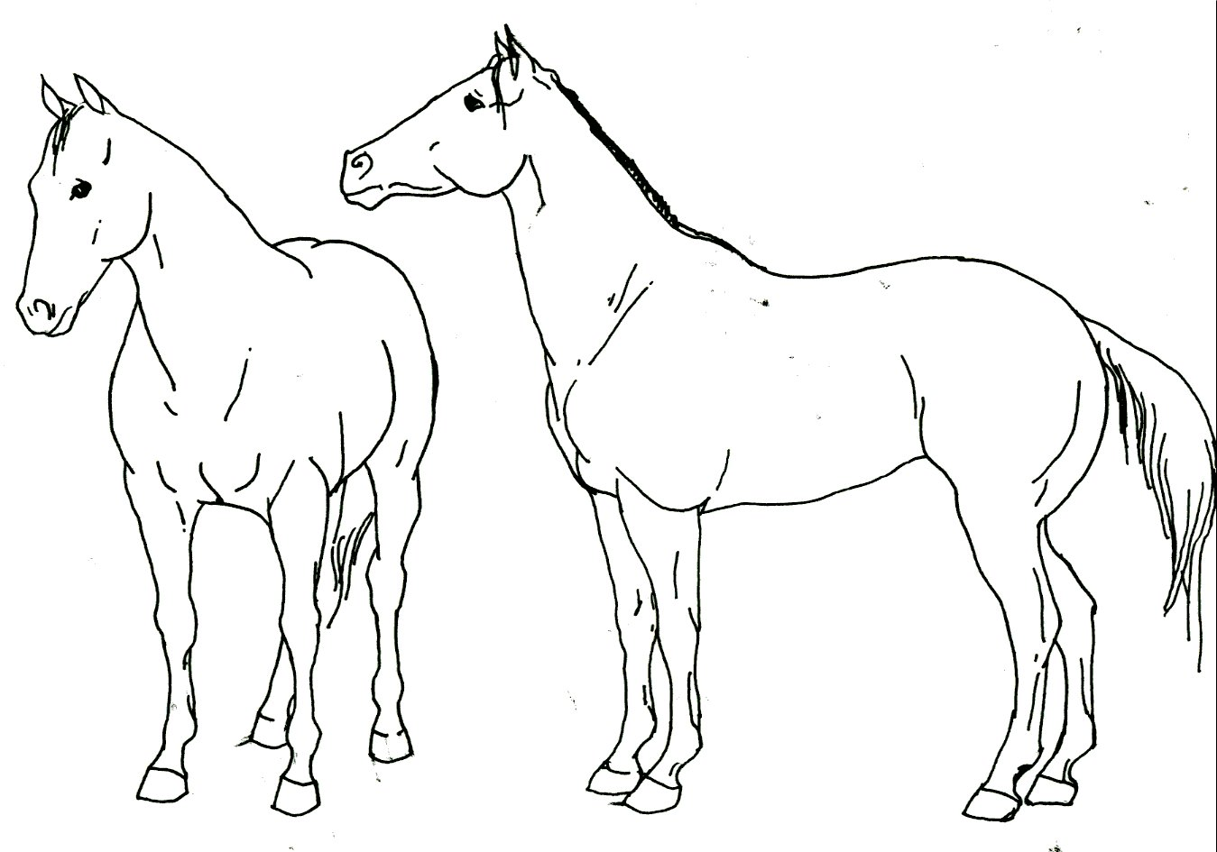 1349x945 Horse Drawings Quarter Horse By Stonegate Traditional Art
