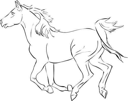 504x397 Horse Head Pictures To Color Noble Horse Head Free Horse Head