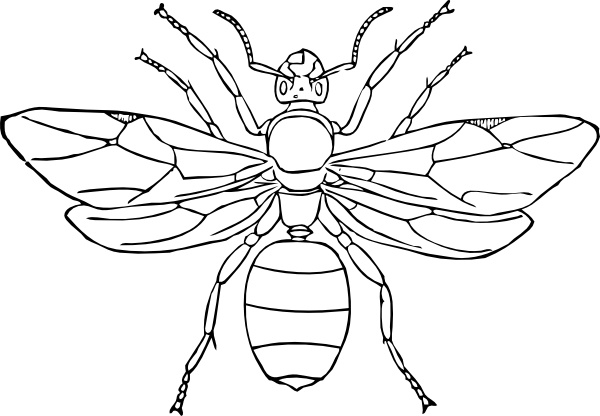 600x416 Queen Ant Clip Art Free Vector In Open Office Drawing Svg ( Svg