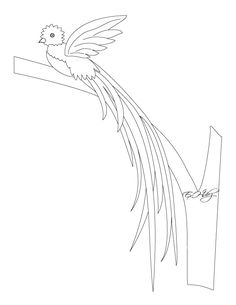 236x305 Learn How To Draw A Resplendent Quetzal (Birds) Step By Step