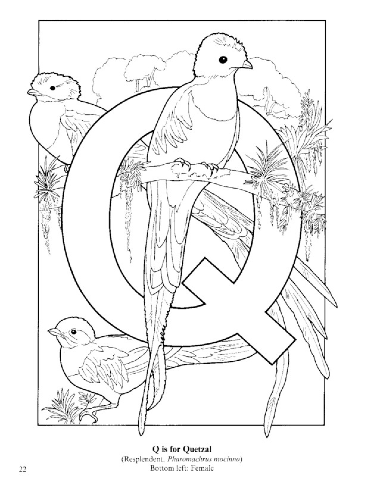1276x1650 Letter Q Coloring Pages Quetzal Bird