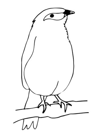 360x480 Mynah Bird Coloring Page Free Printable Coloring Pages
