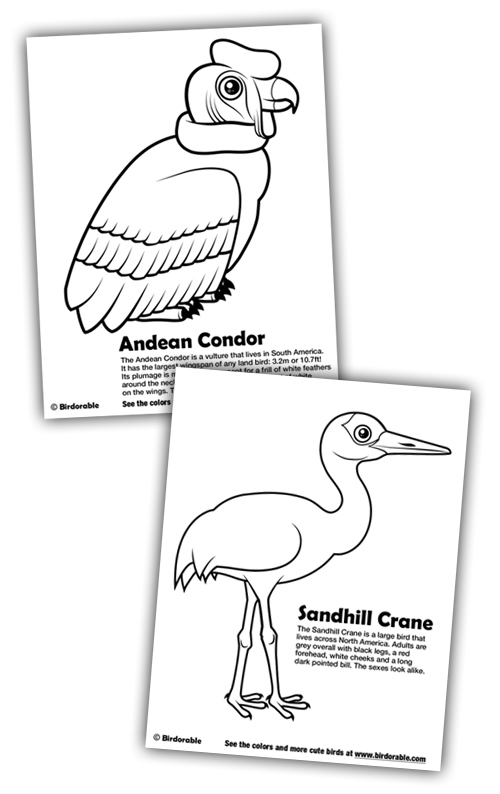500x794 New Coloring Pages Andean Condor And Sandhill Crane In Fun Stuff