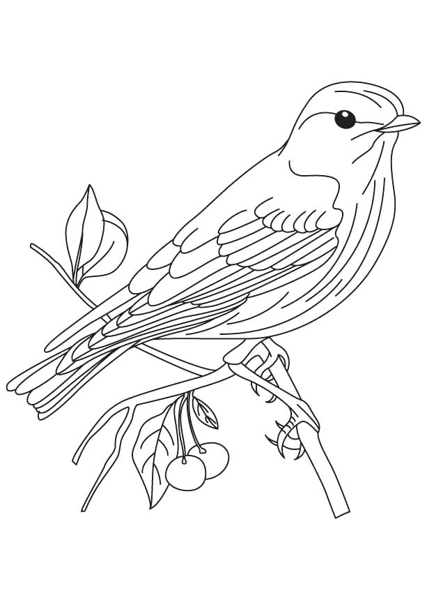 613x860 Quetzal Coloring Page Blue Bird Cartoon Coloring Pages Quetzal