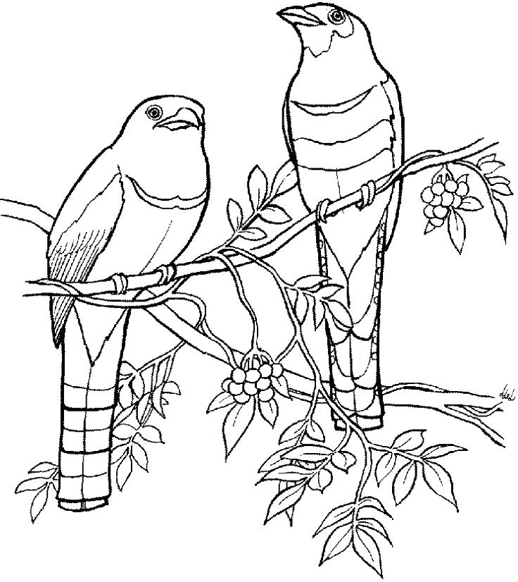 736x826 Quetzal Coloring Page Large Image Quetzal Bird Coloring Page