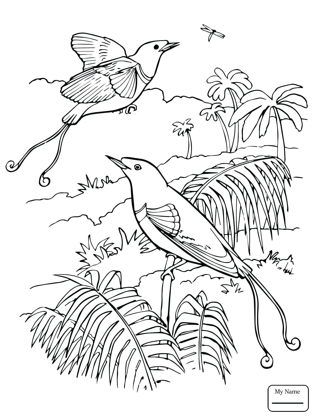 1224x1632 Coloring Quetzal Coloring Page Birds Bird Of Paradise King Pages