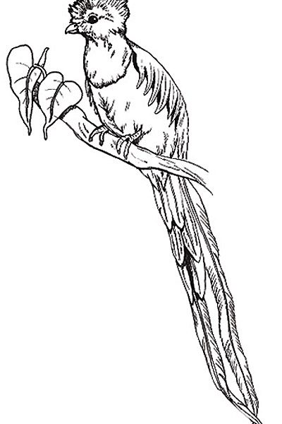 400x600 Download Quetzal Animal Coloring Pages