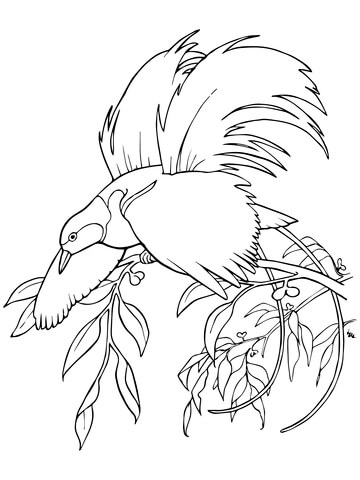 360x480 Greater Bird Of Paradise Coloring Page Free Printable Coloring Pages