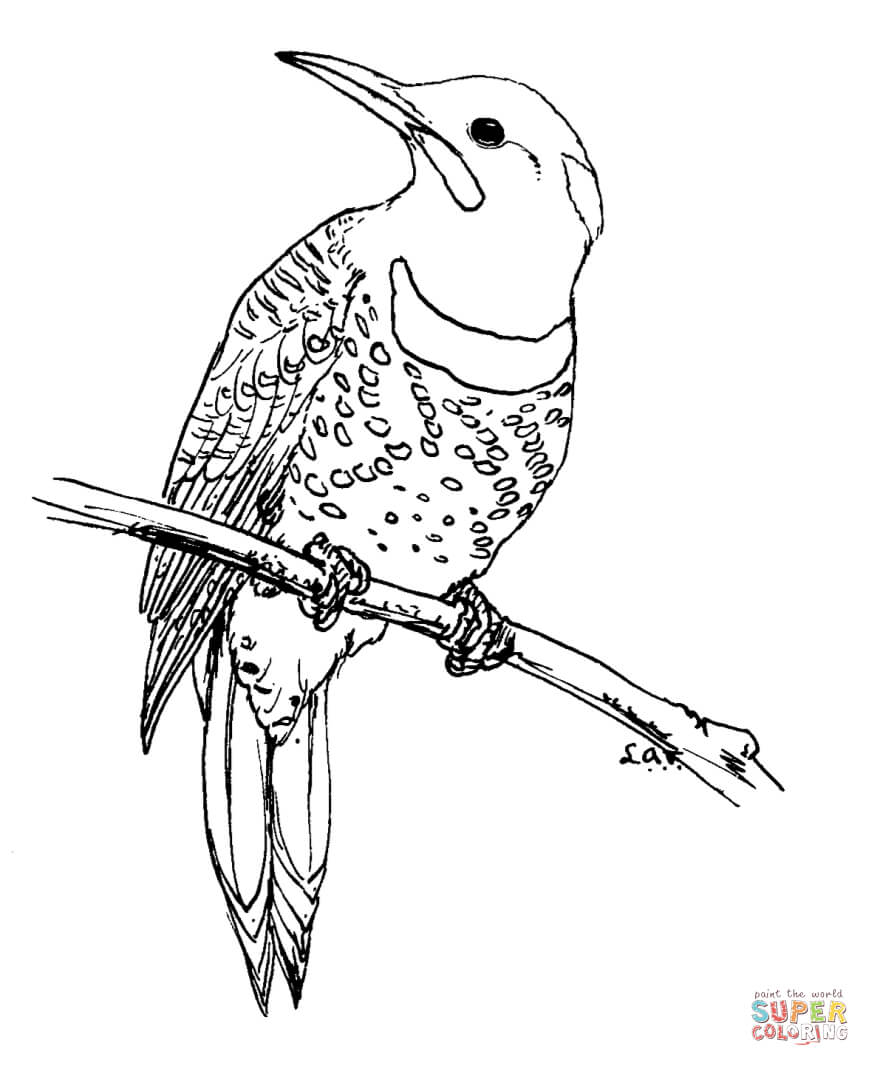 870x1066 Northern Flicker Coloring Page Free Printable Pages