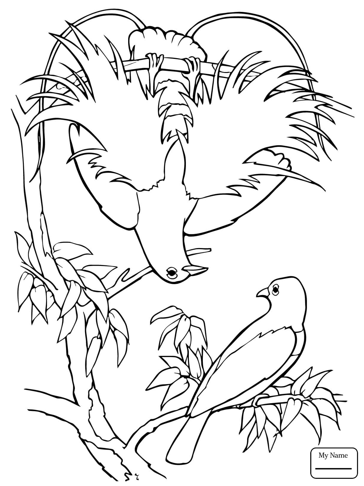 1224x1632 Coloring Pages For Kids Birds Quetzal Bird Of Paradise Bird Of