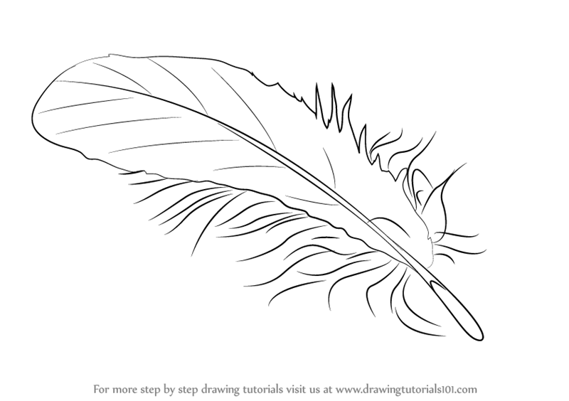800x564 Learn How To Draw A Feather (Everyday Objects) Step By Step