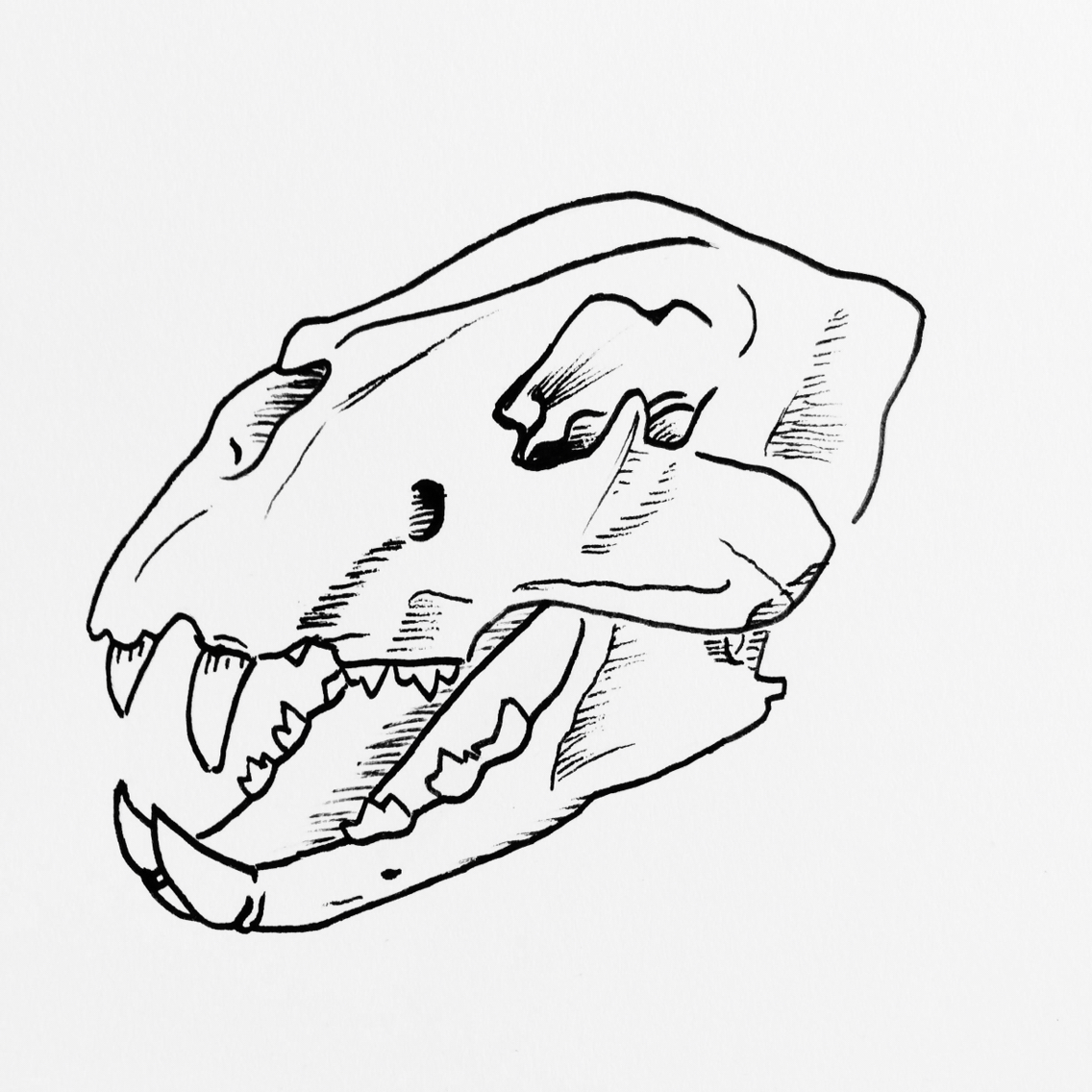 1136x1136 Simple Lion Skull Drawing