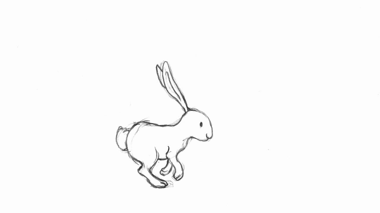 1280x720 Running Rabbit