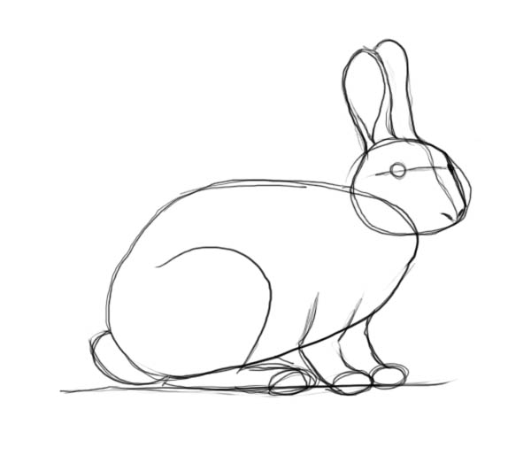 600x523 How To Draw A Rabbit