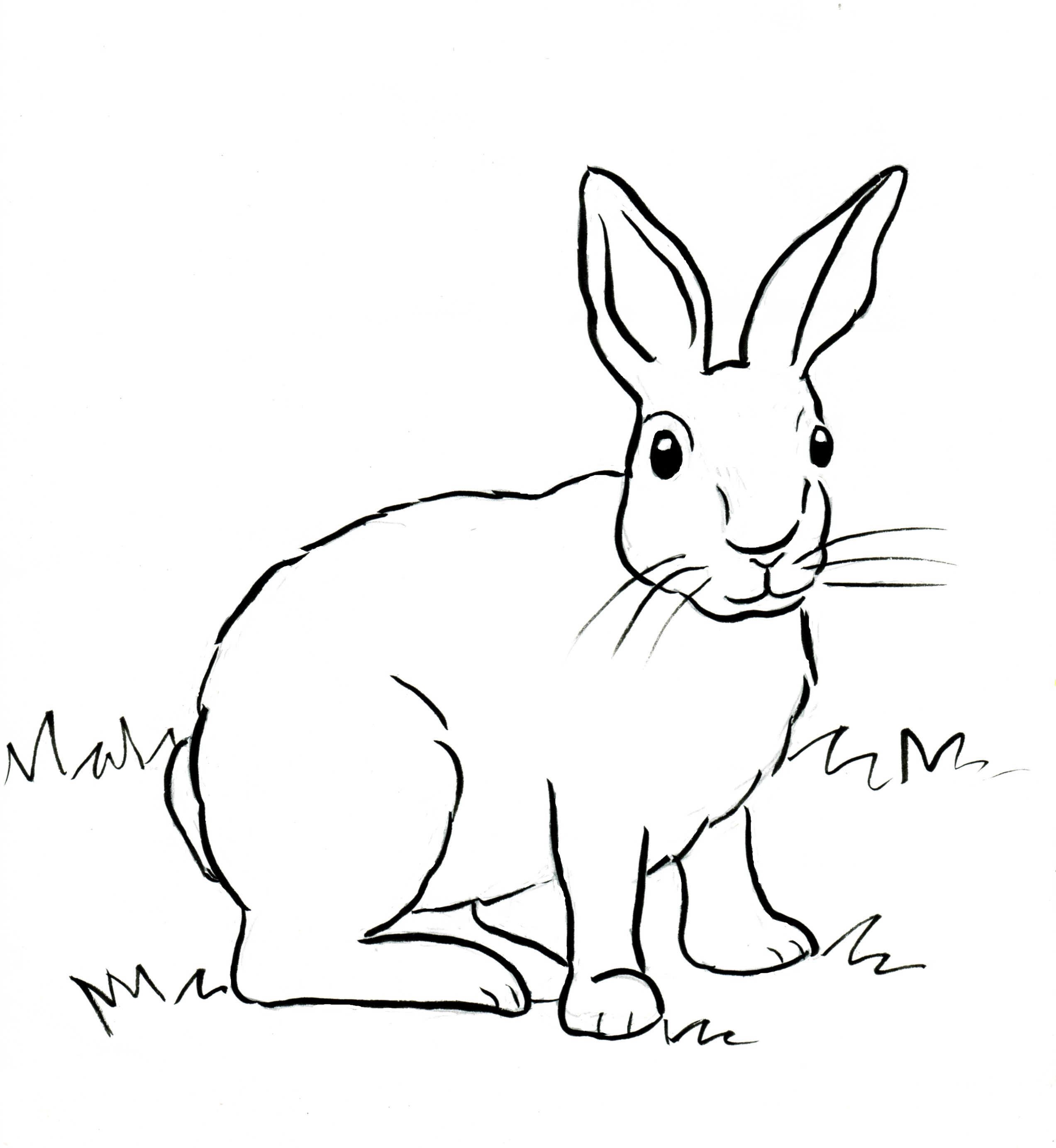 2545x2766 Cottontail Rabbit Coloring Page