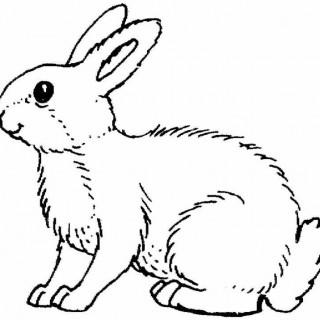 320x320 Drawings Animals Aaa Bunnies Ii Bunny Outlines Rabbit Drawing