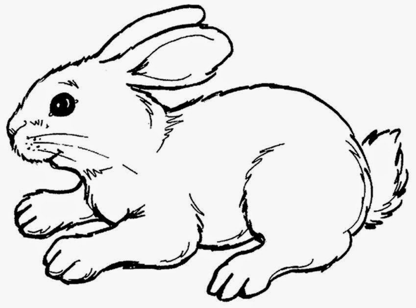 849x629 Coloring Picture Of Rabbit Free Pictures