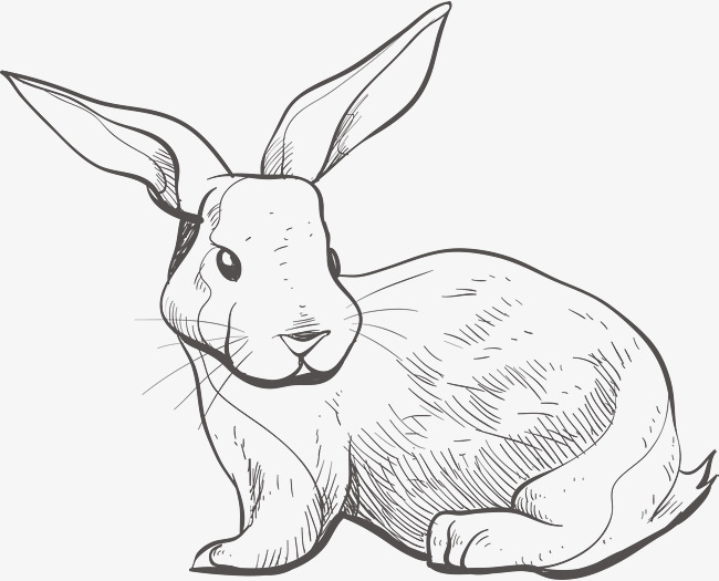 650x525 Sketch Bunny, Vector Png, Bunny, Lovely Rabbit Png And Vector