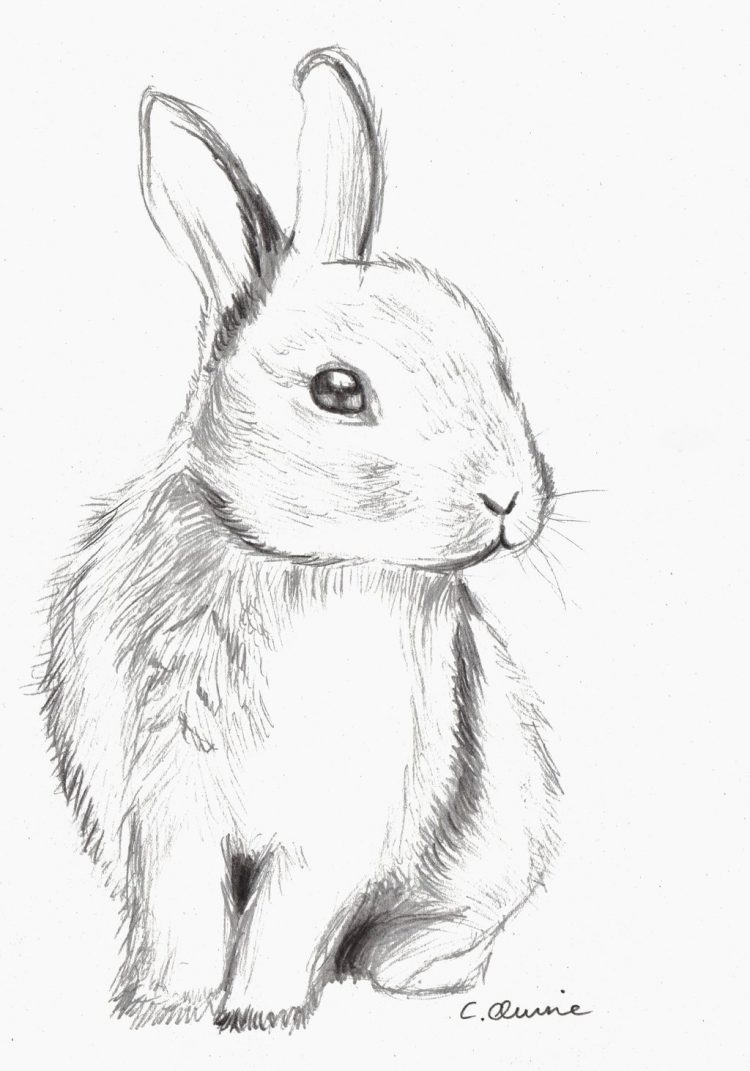 750x1071 Drawing How Draw A Cute Bunny Face Step By Step Also How