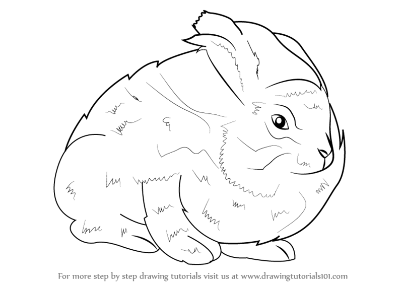 800x566 Learn How To Draw An Angora Rabbit (Other Animals) Step By Step