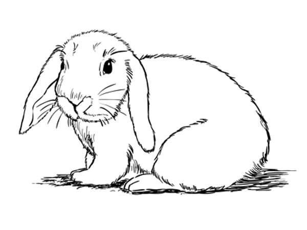 600x450 How To Draw A Bunny Sketchbook Challenge 28