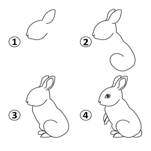 500x500 How To Draw A Rabbit
