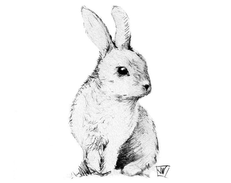 736x584 9 Best Rabbits Images On Draw, Black And Drawing