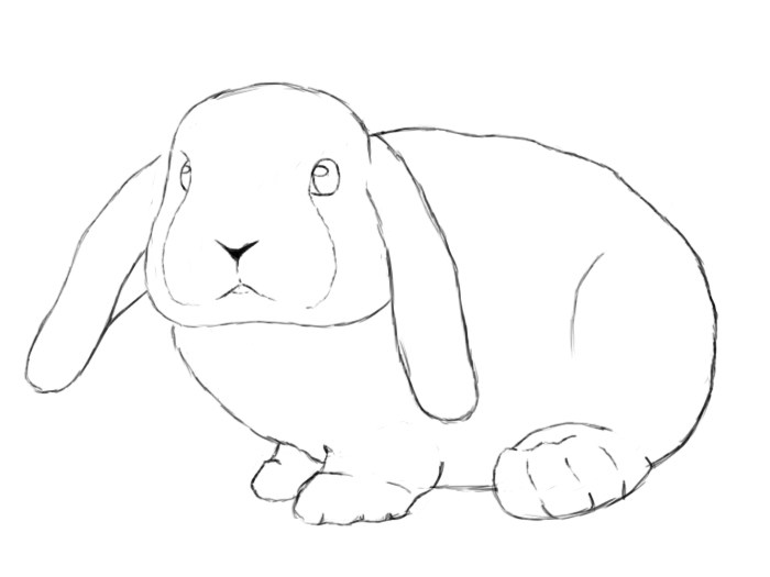 700x525 How To Draw A Rabbit Easy Step By Luckily This Is Easily Done