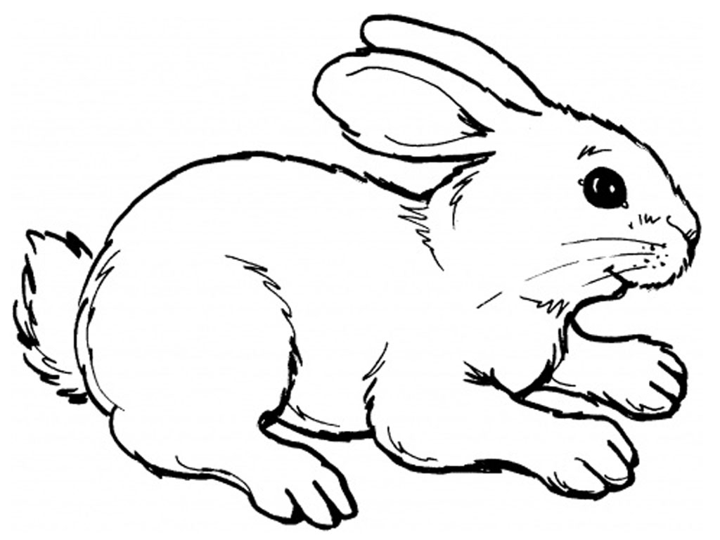 1024x768 Simple Drawing Of Rabbit Coloring Page Cute Rabbit Drawing Easy
