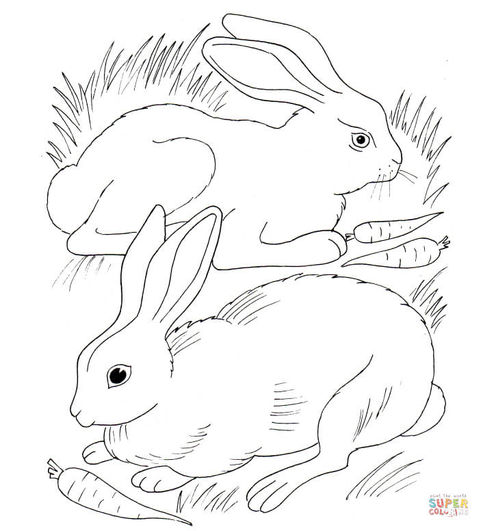 706x776 Rabbits Eating Carrots Coloring Page Free Printable Coloring Pages