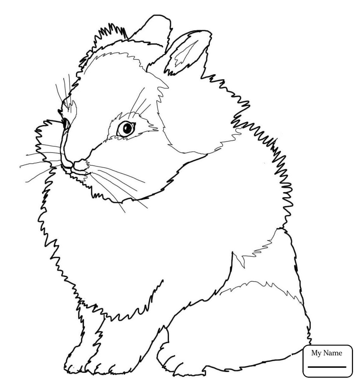 1142x1224 Rabbits