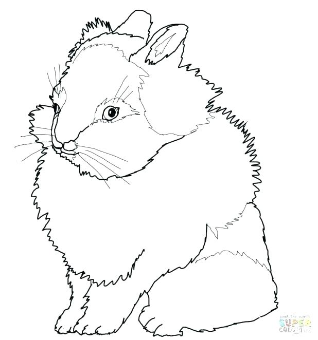 618x662 Rabbit For Coloring Rabbit Face Coloring Page Click The Rabbit