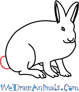 300x350 How To Draw An Arctic Hare