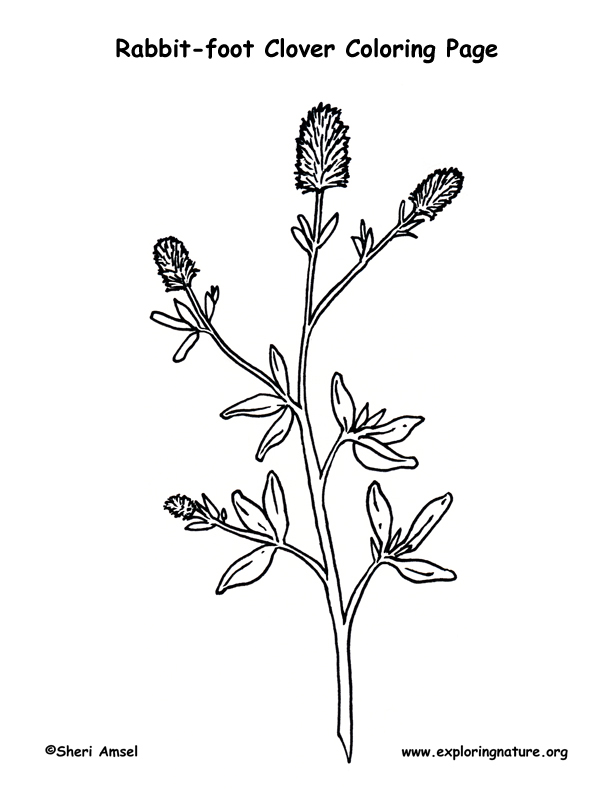 612x792 Clover (Rabbit Foot) Coloring Page