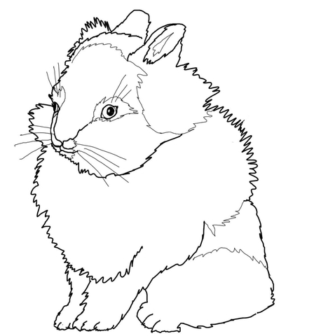 448x480 Lionhead Rabbit Coloring Page Free Printable Coloring Pages